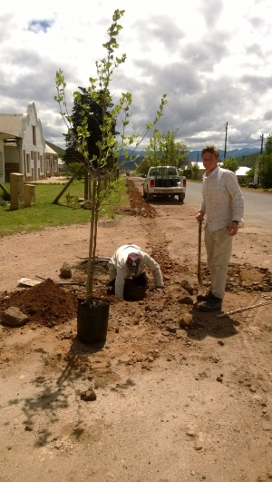 First tree - 9 Oct 2014