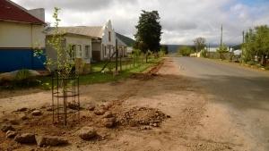 First trees - lane taking shape
