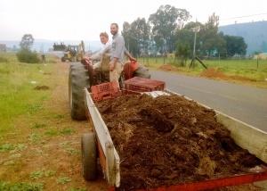 Kompos word aangery ~ Bringing compost
