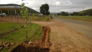 Lane planting underway