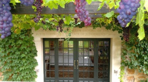 Pergola grapes - low res