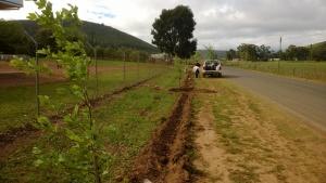 The planting crew ahead