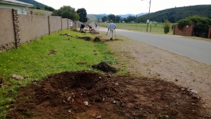 Tree planting - soil preparation
